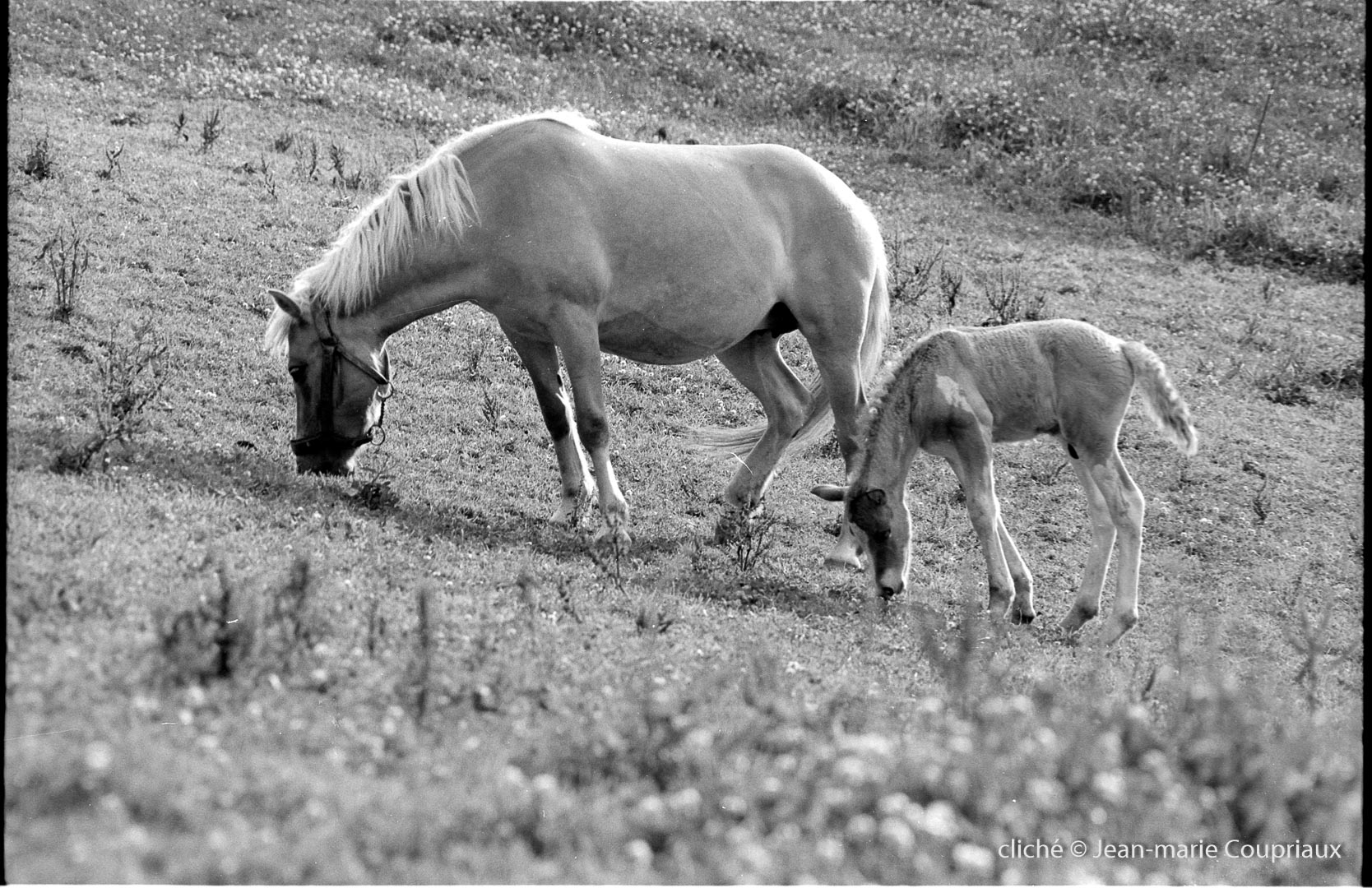 1979_famille-nb-81