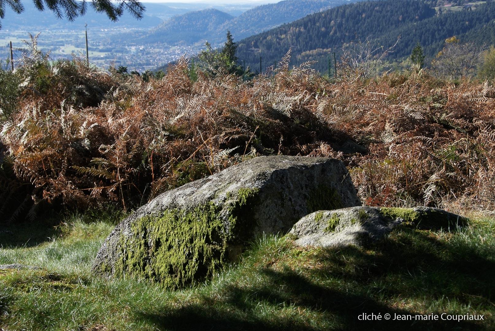 Nature-2010-6