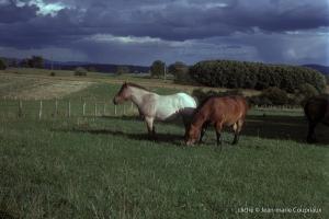 1974_Menoux-13