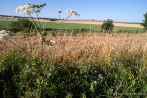 Agri_cultures-341-1