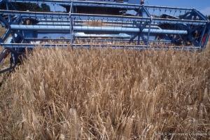 Agri_cultures-346-1