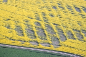Agri_cultures-384-2