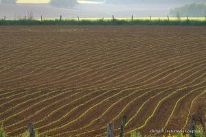 Agri_cultures-600-601