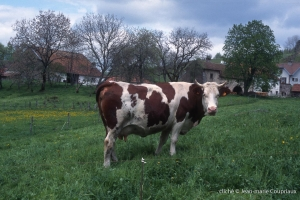 Agri_elevages-705
