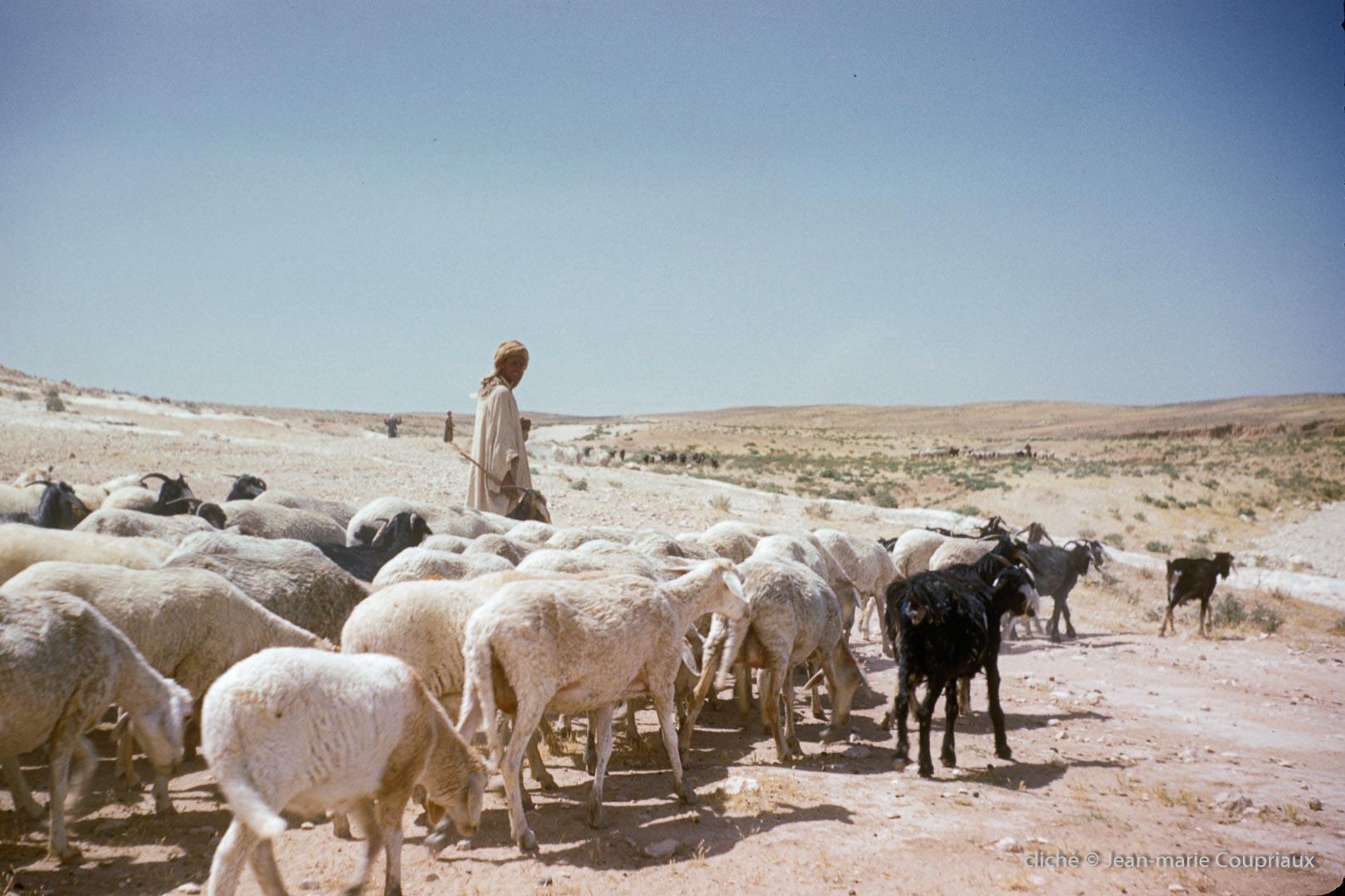 311-1958_Algerie-35