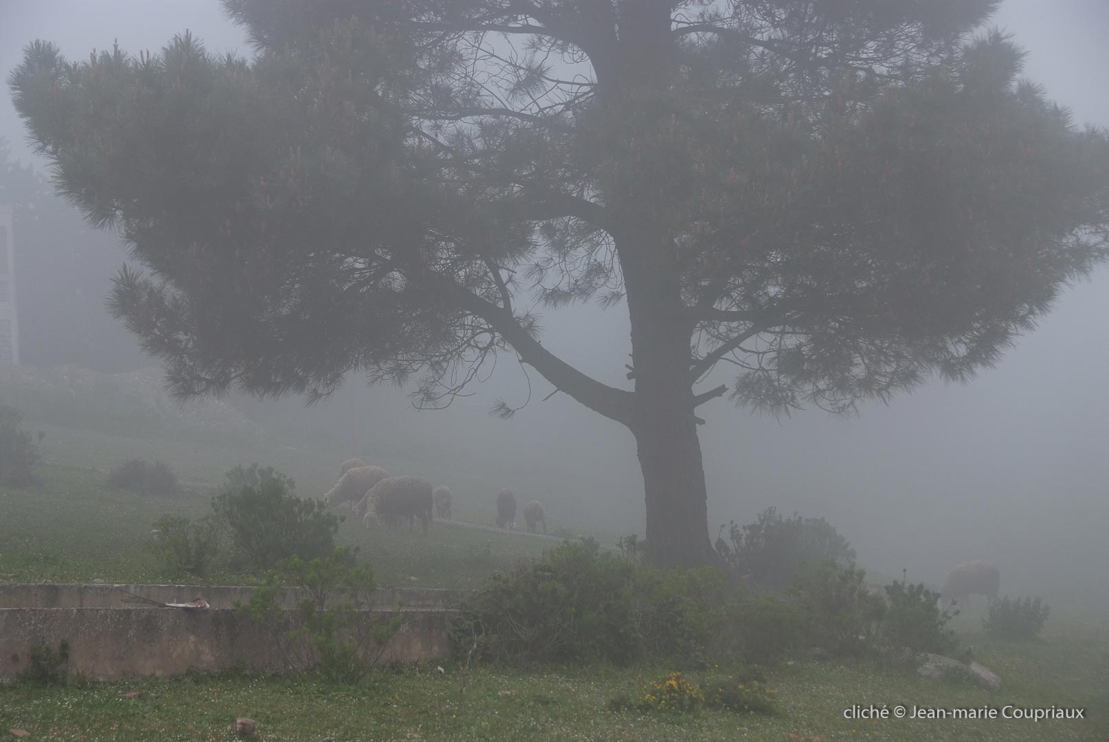 802-2011_Algerie-1320