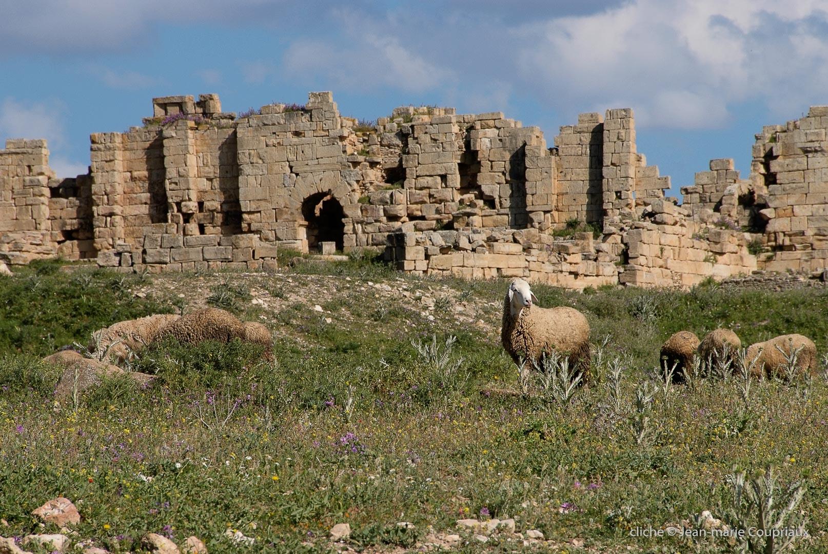 802-2011_Algerie-322