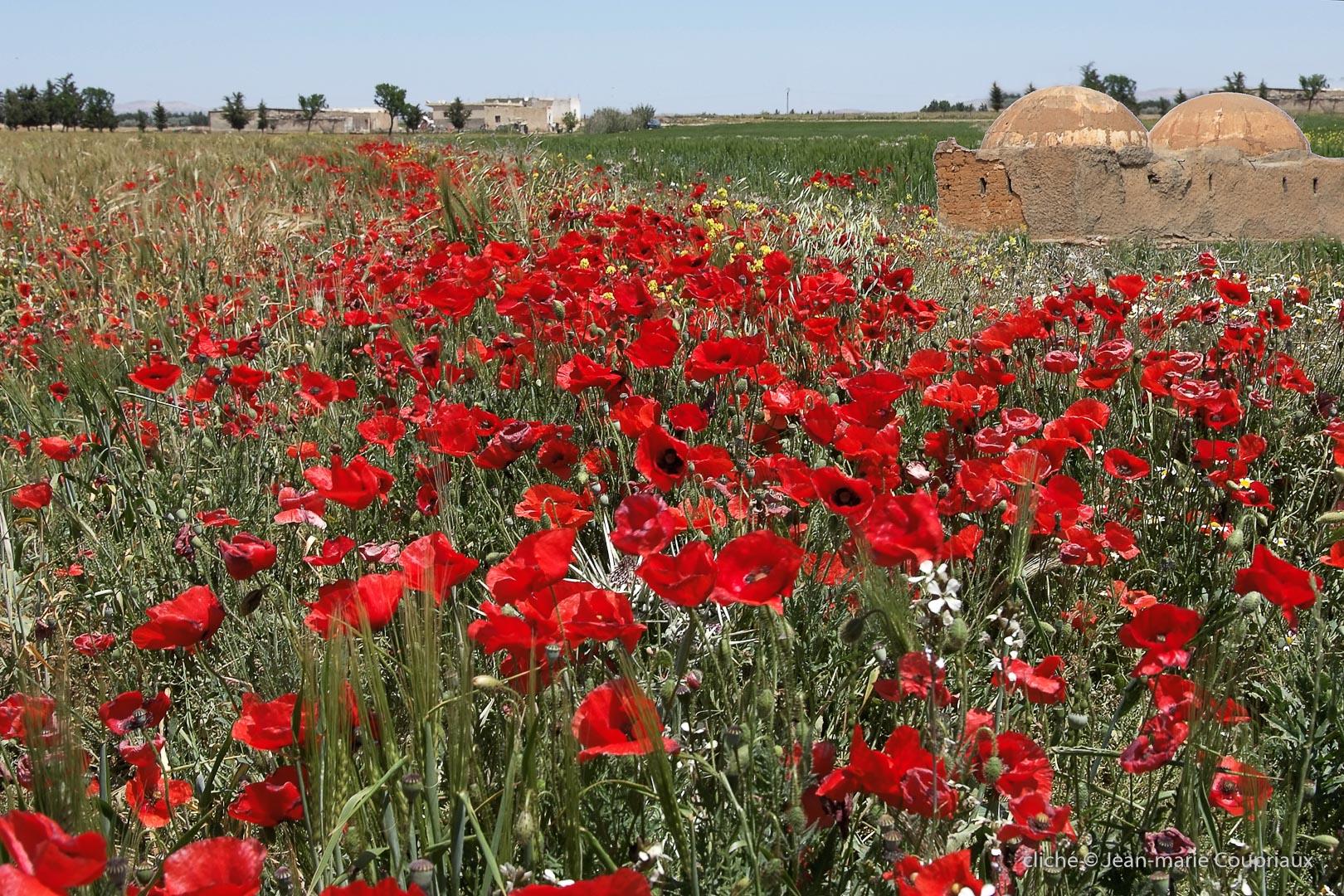 802-2011_Algerie-983