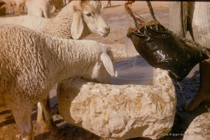 1_293-Algerie-BirElAter-1958