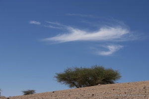 602-2007_Algerie-583
