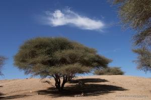 602-2007_Algerie-587
