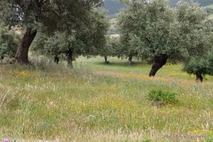 802-2011_Algerie-1367