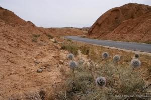 802-2011_Algerie-718