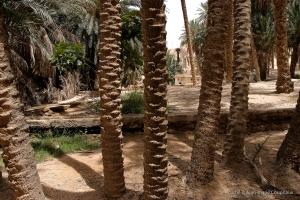 802-2011_Algerie-759