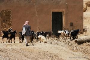 802-2011_Algerie-797
