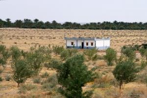 802-2011_Algerie-836