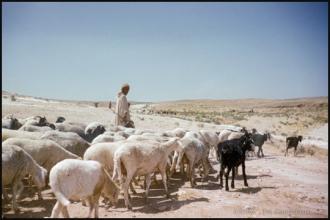 1958_Algerie-35