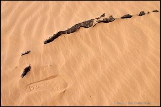 2007_Algerie-137
