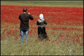 2011_Algerie-1153