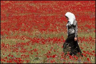 2011_Algerie-1156