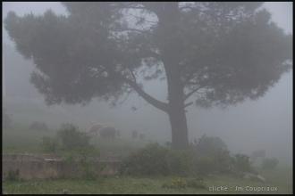 2011_Algerie-1320