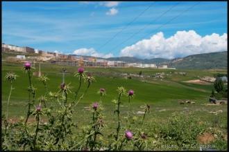 2011_Algerie-275
