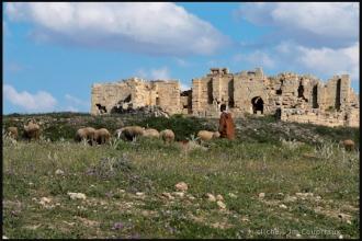 2011_Algerie-325