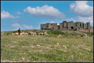 2011_Algerie-326