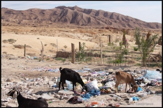 2011_Algerie-617