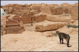 2011_Algerie-748