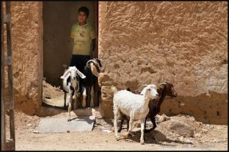 2011_Algerie-796