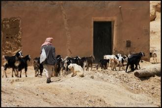 2011_Algerie-797