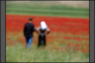 329-Algerie-2011