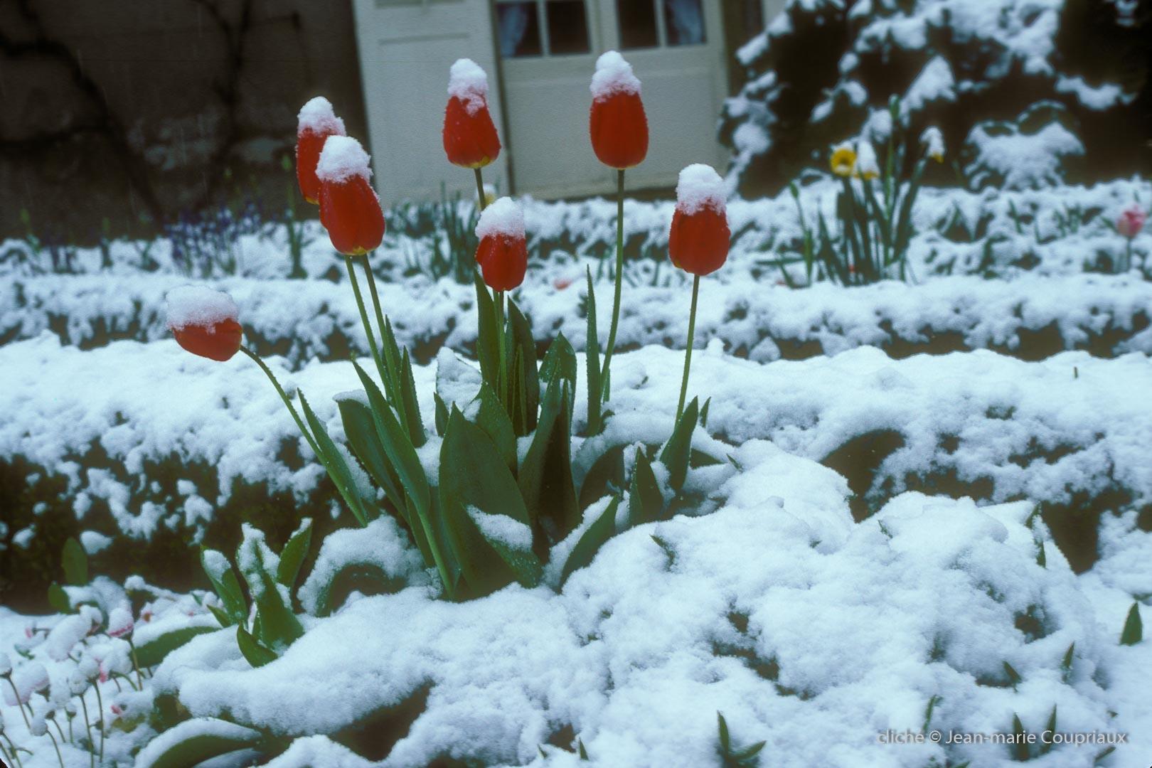 1979_jardin-Menoux_11