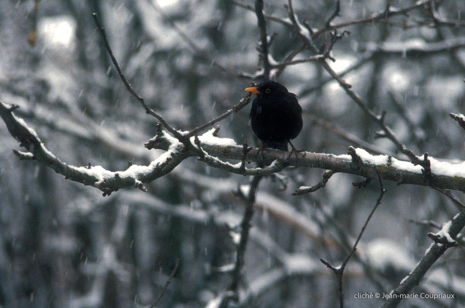 1986_Menoux_neige_6F