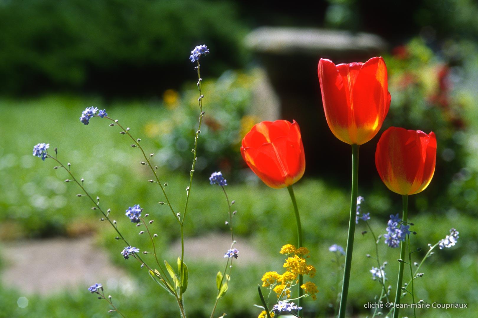 1999_Menoux_fleurs_essais-Ekta2