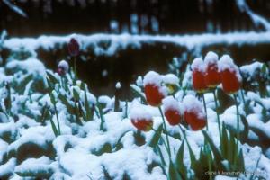 1979_jardin-Menoux_10