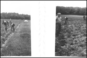 1961_agri-Menoux-1.jpg