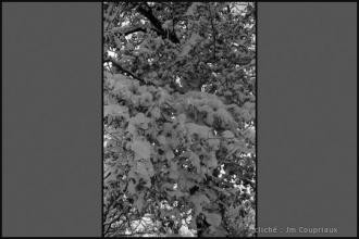 1962_nb-24.jpg