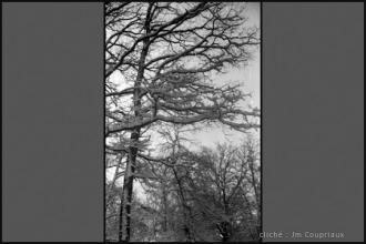 1962_nb-25.jpg