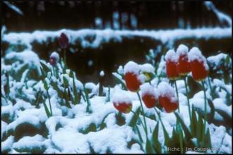 1979_jardin-Menoux_10.jpg