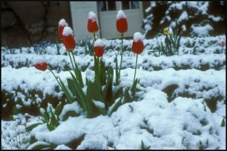 1979_jardin-Menoux_11.jpg