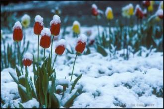 1979_jardin-Menoux_3.jpg