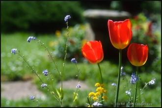 1999_Menoux_fleurs_essais-Ekta2.jpg