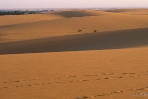 2006_Egypte-255