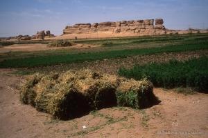 2006_Egypte-304