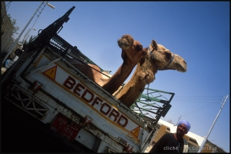 2006_Egypte-195