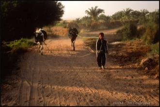 2006_Egypte-246