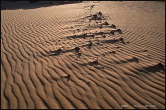 2006_Egypte-55