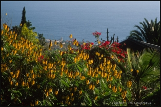 2005_Madere-106.jpg
